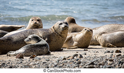 Harbor Seals posing