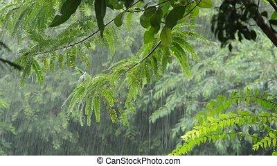 hard rain falling on tree in garden