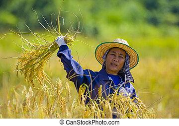 woman cutting rice