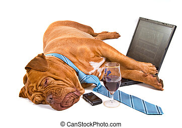 Hardworker Fell Asleep