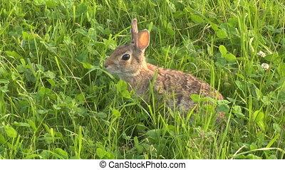 hare 04 - Hare jump away