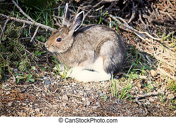 Hare about to run