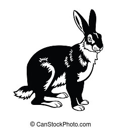 hare black white - european hare black and white image
