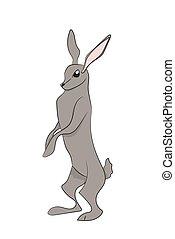 hare gray vector