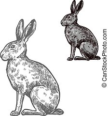 Hare or rabbit animal sketch for nature design