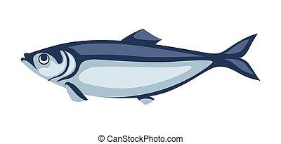 hareng, sardine., fish., illustration, pacifique