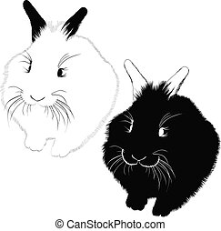 hares animals