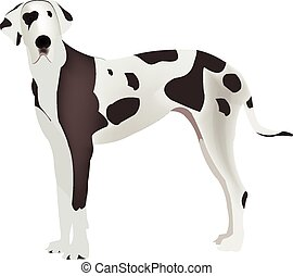 Harlequin Great Dane - Large animal breed domestic harlequin...