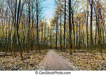 harmonic pattern of trees in forest with path