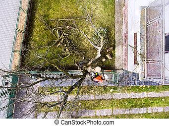 harnais, bûcheron, arbre., tronçonneuse, taille
