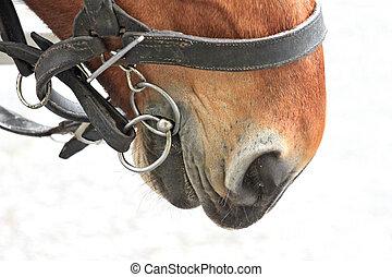 harnais, cheval, baie