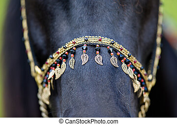 Harness on black horse