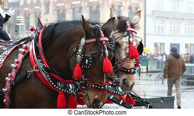 Harnessed horses during Christmas fair in Krakow
