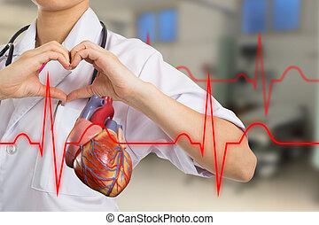 hart, arts, vervaardiging, vorm