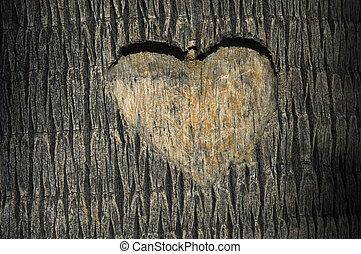 hart, gekerfde, in, de boomstam van de boom