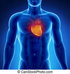 hart, gloeiend, mannelijke , borst