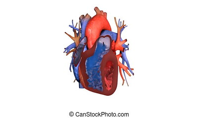hart, op, animatie, bloed, actie, afsluiten