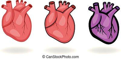 hart, set, plat, iconen, vector, menselijk, stijl