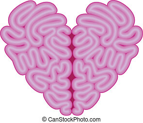 hart, vector, hersenen