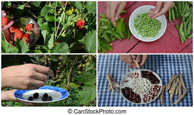 harvest berry and legume peas and beans in garden. Clips collage