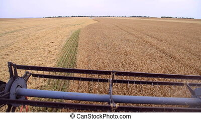 Harvest - combine harvested wheat in the field