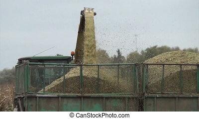 harvest corn closeup - Follow closeup of combine harvester...