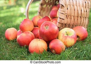 Harvest in a garden