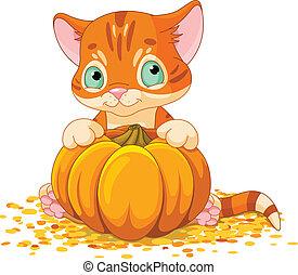 Harvest Kitten - Cute little kitten holding giant pumpkin