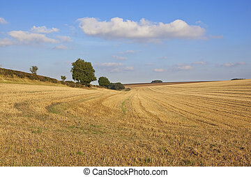harvest landscape in autumn - harvested wheat fields with...