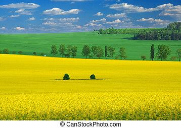 Harvest landscape - Ripe fields with blue cloud filled sky