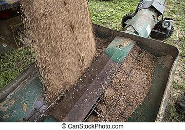 Harvest Lentils Canada