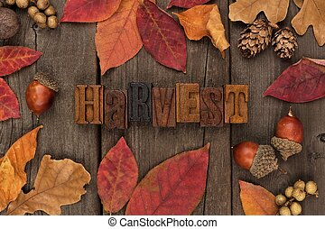 Harvest letterpress with frame of autumn leaves over wood