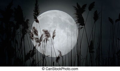 Harvest moon - real footage - View of the full moon. Harvest...