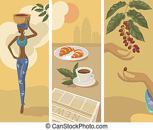 harvest of coffee