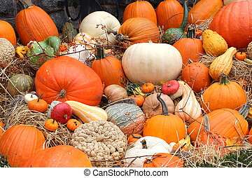 Harvest of colorful pumpkin variety