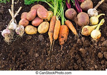 Harvest of fresh vegetables on the ground, in garden...