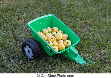 Harvest of organic apples in a green toy trailer