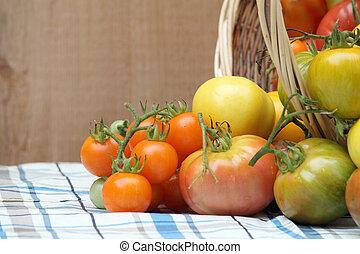 Harvest of Organic Heritage Tomatoes