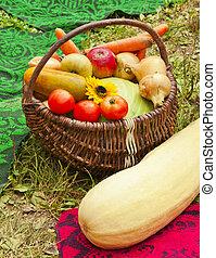 Harvest of vegetables in the basket
