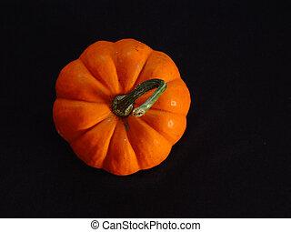 Harvest Pumpkin Black