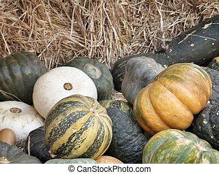 harvest pumpkins