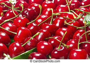 Harvest ripe cherries with green leaves