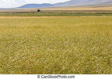 harvest season concept