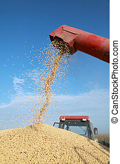 Harvest - Grain auger of combine pouring soy bean into...