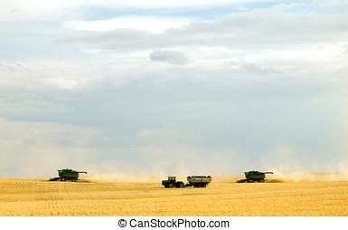 Harvest time 1