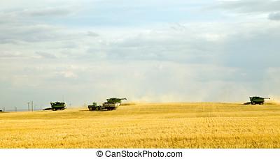 Harvest time 4