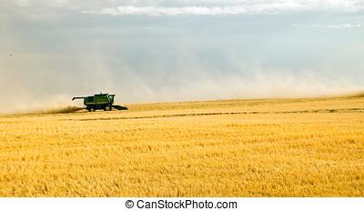 Harvest time 5