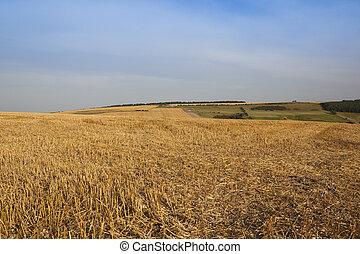 harvest time background