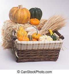 Harvest Time - Basket with pumkins, gourds, acorn squash, ...