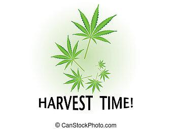 Harvest time cannabis leaf illustration